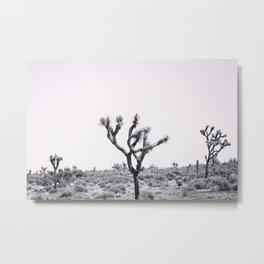 Joshua Tree Monochrome, No. 2 Metal Print