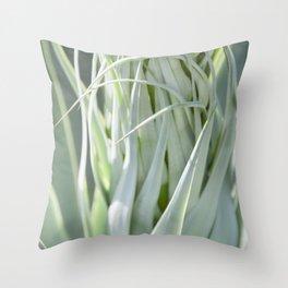 Smooth Cactus Core Throw Pillow
