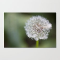 Dandelion Parachute Ball Canvas Print