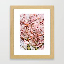 Cherry Blossom Tree (Color) Framed Art Print
