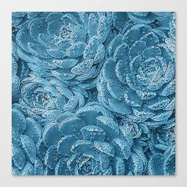 Lace Succulent 2 Canvas Print