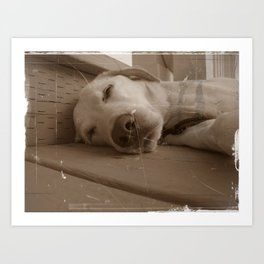 Willy the Dog Art Print