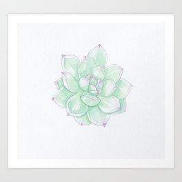 Echeveria Tippy watercolour Art Print
