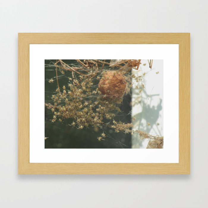 spider babies Framed Art Print