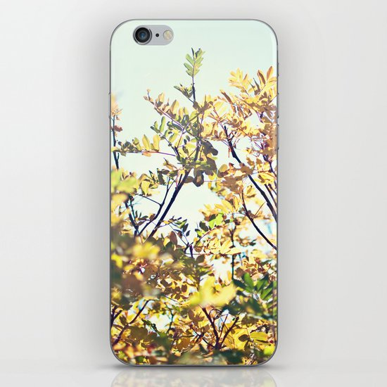 Fall Sun iPhone & iPod Skin