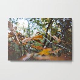 Leafly Painted Metal Print