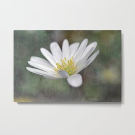 ...all nature is your congratulation... Metal Print