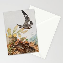 Vintage Print - Nighthawk & Whippoorwill, from Birds of New York (1912) Stationery Cards