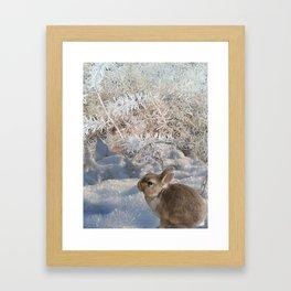 Blue Snow Bunny Framed Art Print