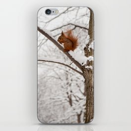 Squirrel sitting on twig in snow iPhone Skin