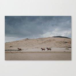 Wild Horses on the Coast Canvas Print