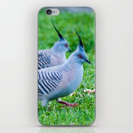 Pair of Crested Turtle Doves iPhone Skin