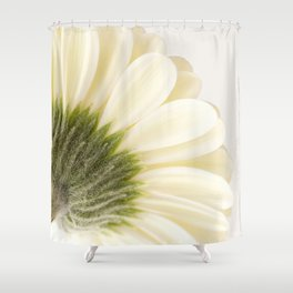 Gerbera Daisy Shower Curtain