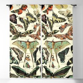 Antique Butterfly Wall Art Print Butterfly Home Decor poster Blackout Curtain