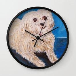 Shih Tzu Maltese Mix Dog Portrait Wall Clock