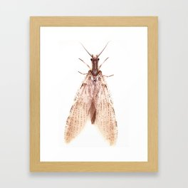 Mysterius Insectus Framed Art Print