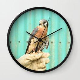 American Kestrel Falcon Bird Wildlife Northwest Wall Clock