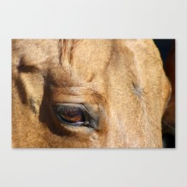 The Eye is a Window - Dun Mare Canvas Print