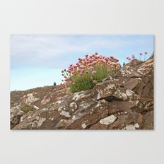 Giant's Causeway flowers Canvas Print