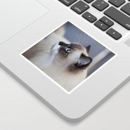 Ragdoll Cat Sticker