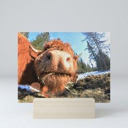 Highland Cow Nose Mini Art Print