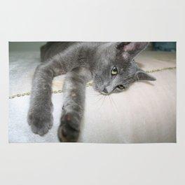 Russian Grey Cross Tabby Cat  Rug