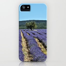 Lavender field, Provence, France iPhone Case