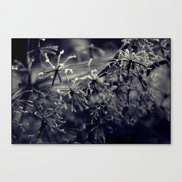 Winter's tale '25' Canvas Print