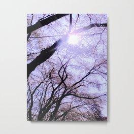 Sakura Rays Metal Print
