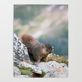 Marmot on the Lookout Poster