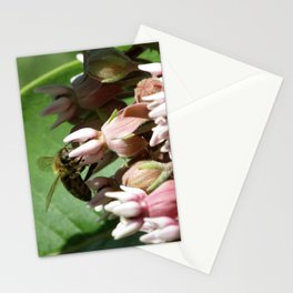 Honeybee on Milkweed Stationery Cards