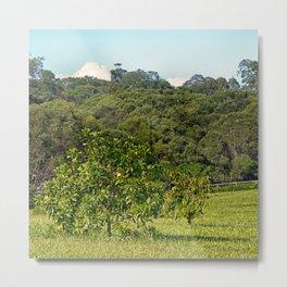 Beautiful citrus tree in rural area Metal Print