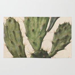Herman Saftleven - Blooming prickly pear cactus (1683) Rug