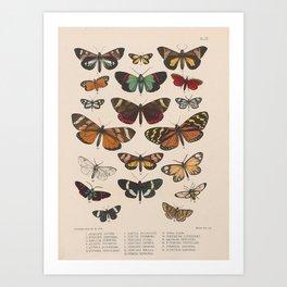 BUTTERFLIES LEPIDOPTERA Art Print