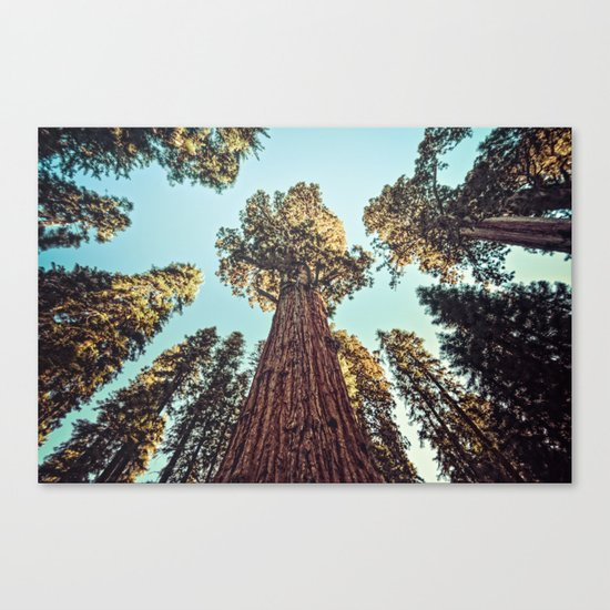 The Largest Tree in the World Canvas Print