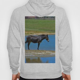 Black Horse. Animal. Pennsylvania Hoody