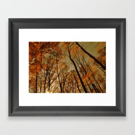 The Light in the Forest Framed Art Print