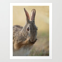 An Eye on You Eastern Cottontail Rabbit Art Print