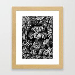 Coral vintage Framed Art Print