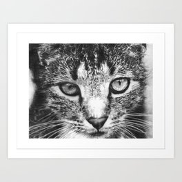Tabby Cat Pencil Drawing Art Print