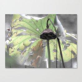 Water Plant Edit Canvas Print
