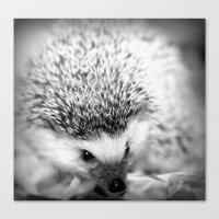 hedgehog Canvas Prints featuring hedgehog by Bunny Noir