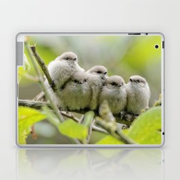 Heartwarming Family Portrait: Five Bushtit Brothers Laptop & iPad Skin