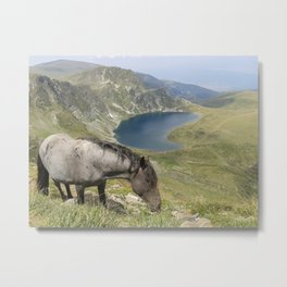 Horse near lake  landsape view Metal Print