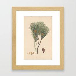 Botanical Pine Framed Art Print