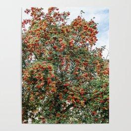 Rowanberries Poster