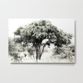 South African Trees Collection Metal Print