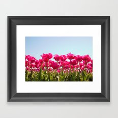 Tulips in Bloom! Framed Art Print