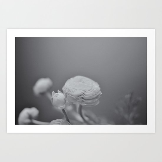 Barely There (Ranunculus, B&W) Art Print