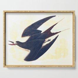 Sooty Tern John James Audubon Scientific Illustration Birds Of America Drawings Serving Tray